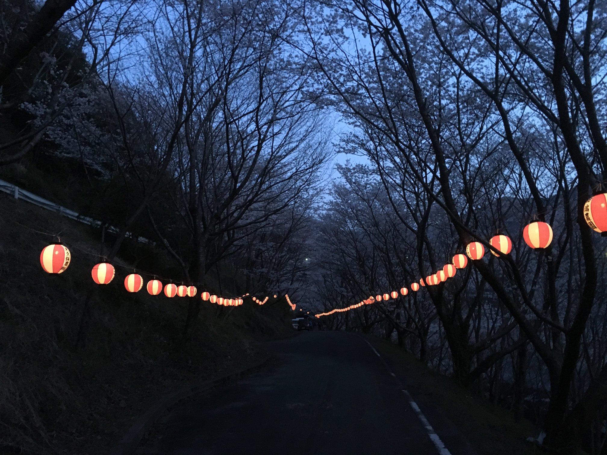 島之瀬ダム 桜の開花について